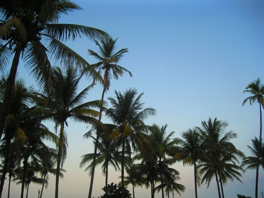 Palm trees beach