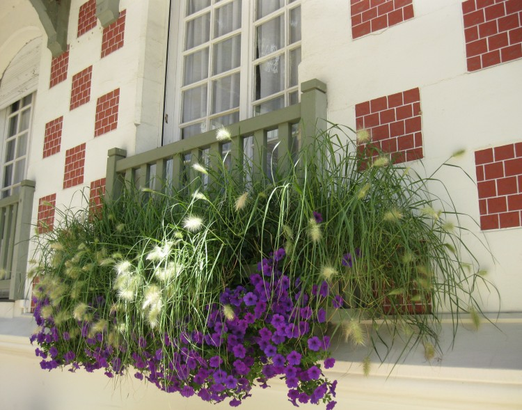 Hotel Normandy Deauville flowers