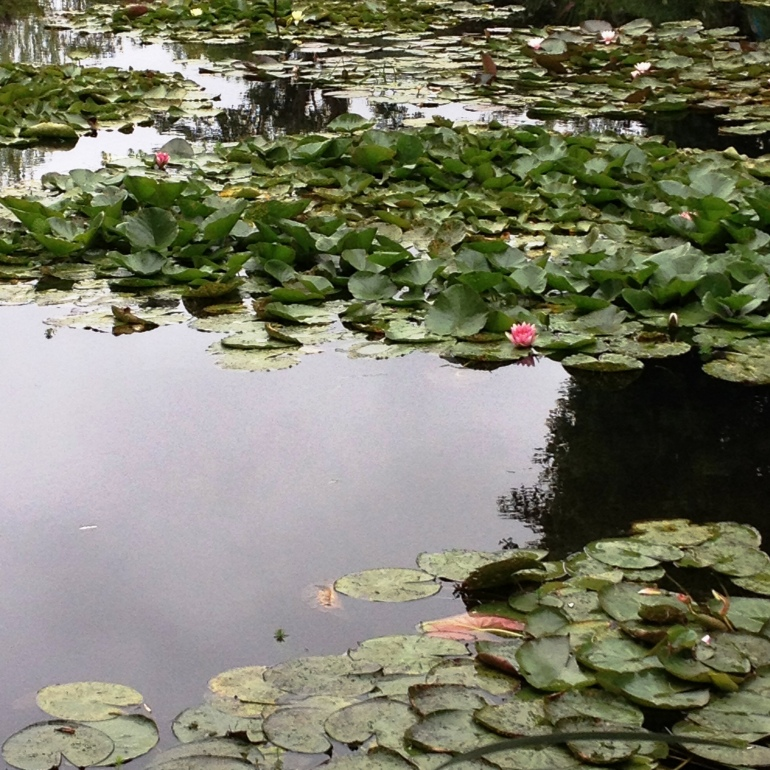 Giverny Claude Monet garden 18 water lily