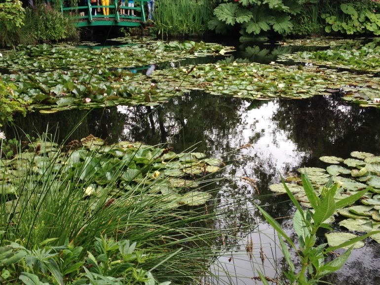 Giverny Claude Monet garden 19 water lily